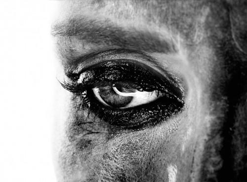 retratos_08 MIQUEL ARNAL