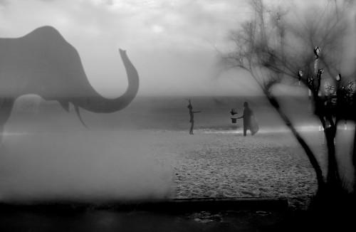 montse campins fotografia blanc i negre gelatina de pla