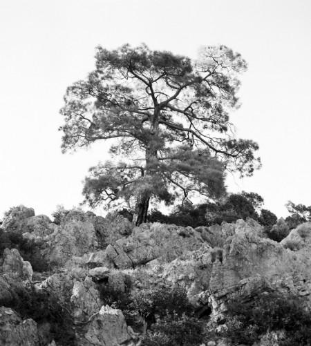 2.treeoflife_2 PAULA OSPINA